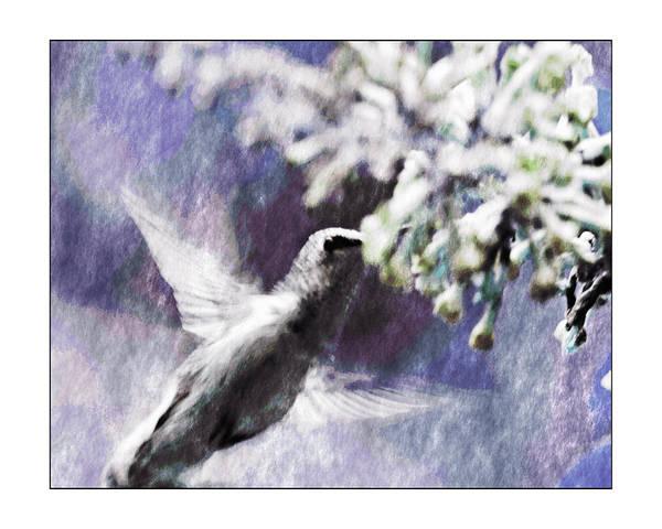 Hummingbird Art Print featuring the photograph Hummer Feeding by Susan Leggett