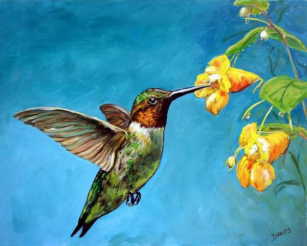 Hummingbirds Art Print featuring the painting Hummingbird With Yellow Flowers by Dottie Dracos