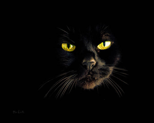 Animal Art Print featuring the photograph In The Shadows One Black Cat by Bob Orsillo
