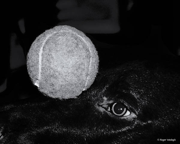 Dog Art Print featuring the photograph Keep Your Eye On The Ball by Roger Wedegis