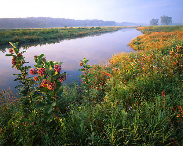 Sunset Art Print featuring the photograph Milk Weed Morning by Ray Mathis