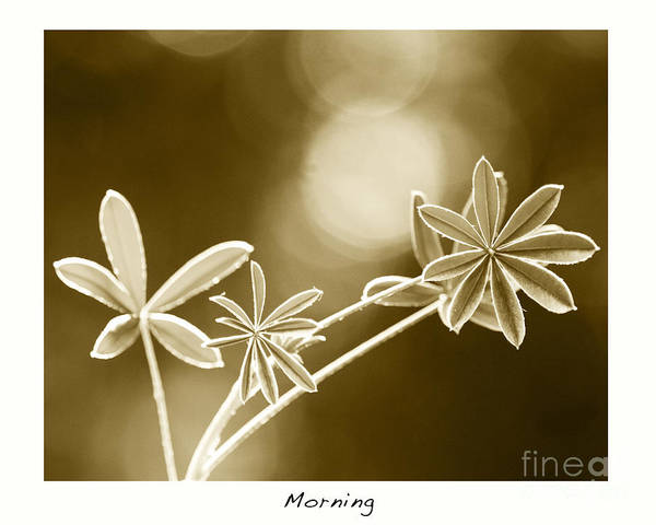 Vintage Art Art Print featuring the photograph Morning by Artist and Photographer Laura Wrede