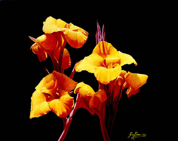 Yellow Cannas Art Print featuring the painting Orange Cannas by Gary Hernandez