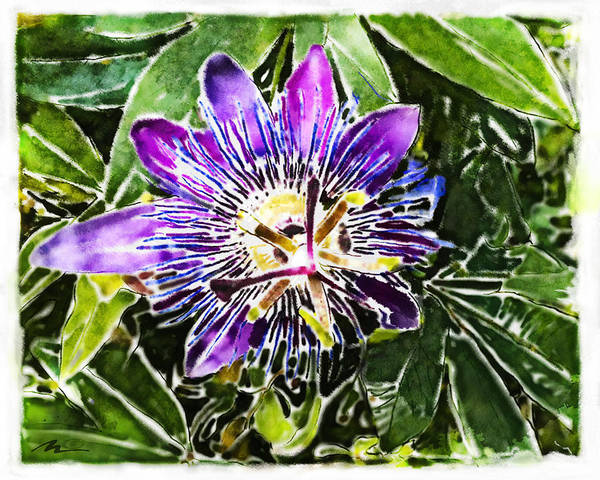 Passion Fruit Flower Pictures Free