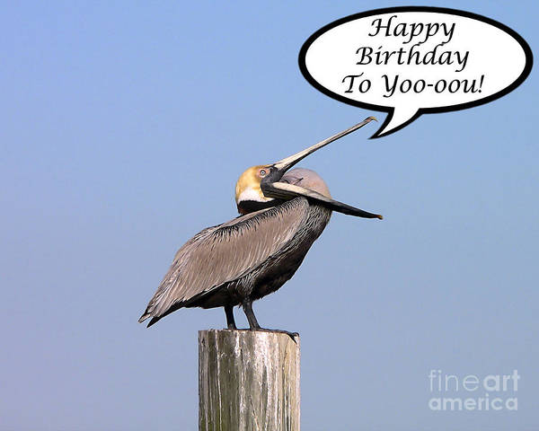 Birthday Art Print Featuring The Photograph Pelican Card By Al Powell Photography USA