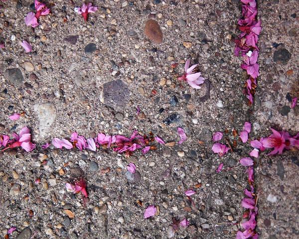 Cherry Blossoms Art Print featuring the photograph Philadelphia Street Art by Rona Black