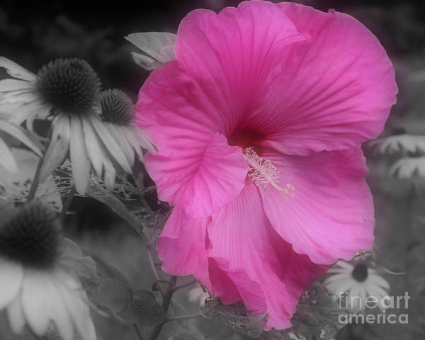 Hibiscus Art Print featuring the photograph Pink Hibiscus In Partial Color by Smilin Eyes Treasures