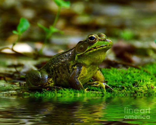 Frog Art Print featuring the photograph Resting In The Shade by Kathy Baccari