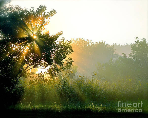Color Photography Art Print featuring the photograph Rise And Shine by Sue Stefanowicz