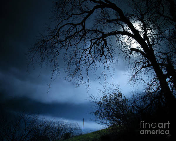 Nature Art Print featuring the photograph Shadowlands 3 by Peter Awax