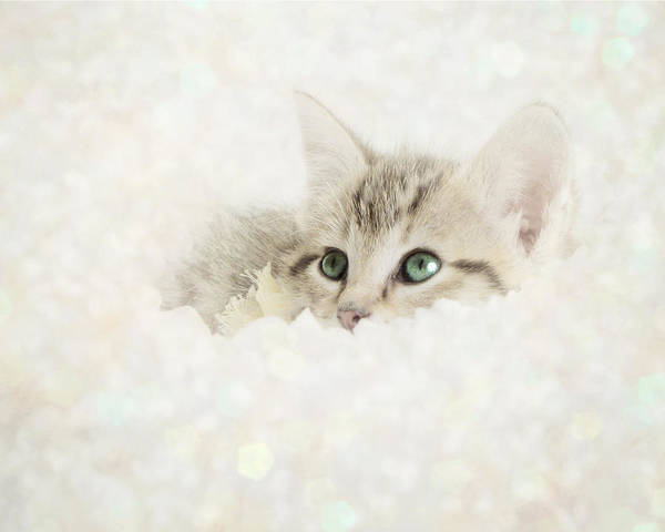 Kitten Art Print featuring the photograph Snow Baby by Amy Tyler