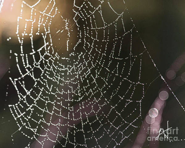 Spider Web Art Print featuring the photograph Spiderweb Green by Artist and Photographer Laura Wrede