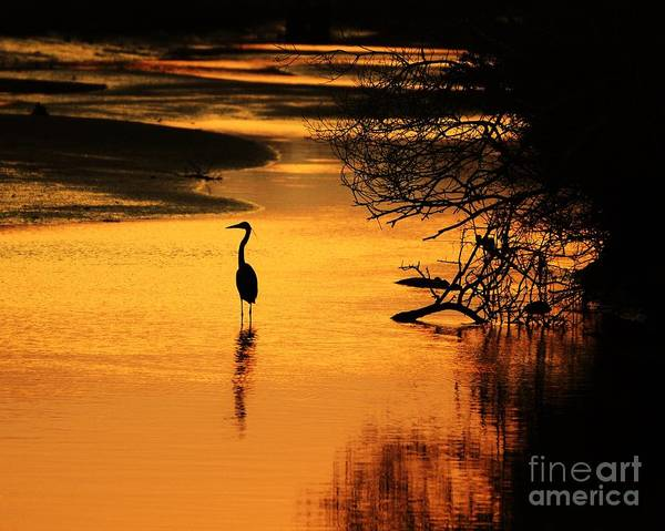 Heron At Sunset Art Print featuring the photograph Sublime Silhouette by Al Powell Photography USA