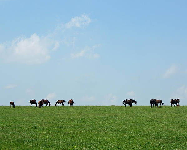 Thoroughbreds Print featuring the photograph Summer Grazing by Roger Potts