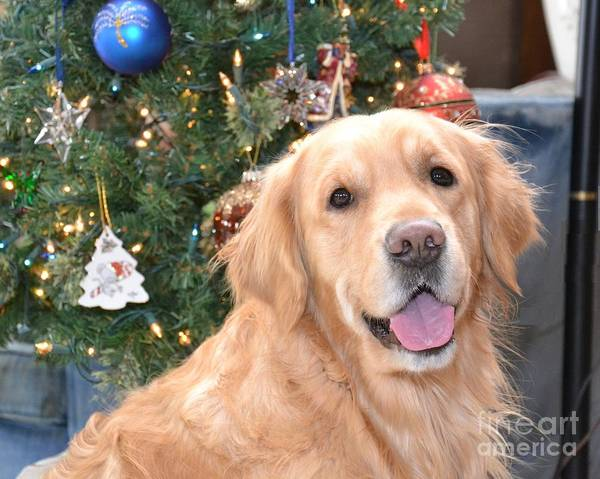 Golden Retriever Art Print featuring the photograph Thunder At Christmas by Tami Roleff