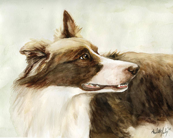 Border Collie Art Print featuring the painting True Devotion by Charlotte Yealey
