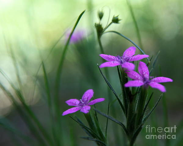 Purple Art Print featuring the photograph Ultra Violet by Neal Eslinger