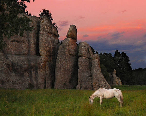 Sunset Art Print featuring the photograph White Horse Grazing by Michael Burg