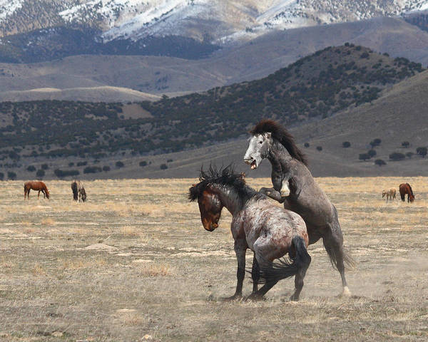 Wild Art Print featuring the photograph Wildfire by Gene Praag