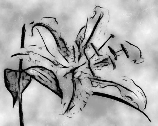 Digital Art Art Print featuring the digital art Exotic Lily In Black And White by Jill Balsam