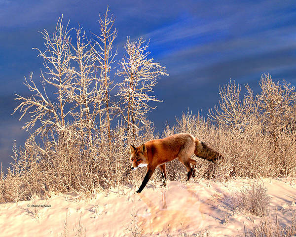 Fox Art Print featuring the photograph Solo Hunter by Dianne Roberson