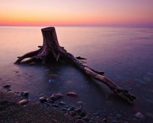 Darren Creighton Art Print featuring the photograph Bluffs Beach Stump by Darren Creighton