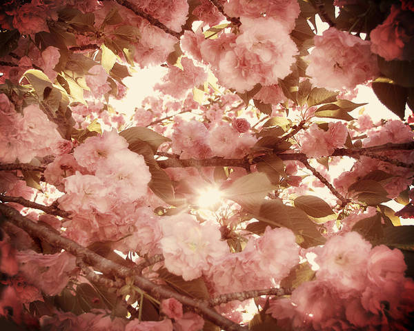 Cherry Blossom Print featuring the photograph Cherry Blossom Sky by Amy Tyler