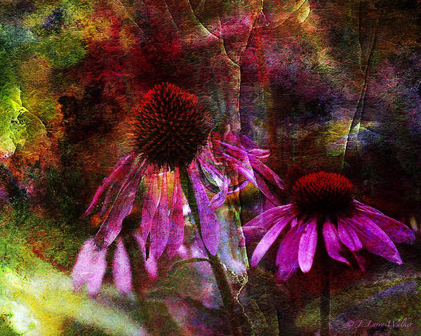 J Larry Walker Art Print featuring the photograph Cone Flower Beauties by J Larry Walker
