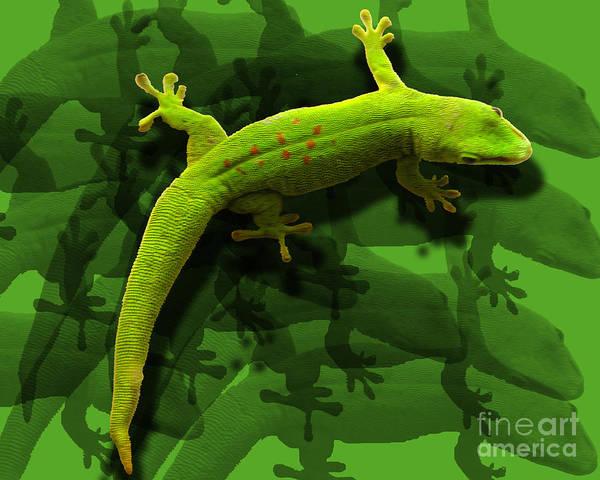 Lizard Art Print featuring the photograph Gecko-gecko-gecko by Anne Ferguson