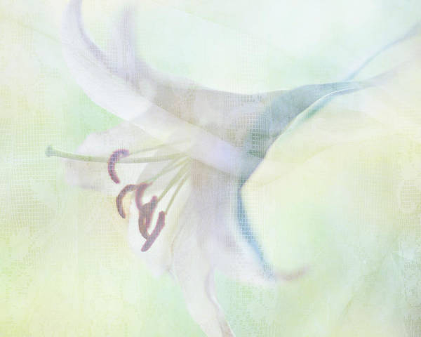 Horizontal Print featuring the photograph Gentle Lily by Sharon Lapkin