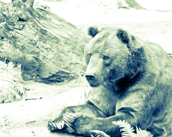 Grizzly Bear Art Print featuring the photograph Grizzly Bear by Steve McKinzie