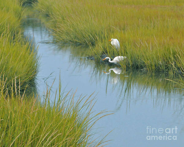 Heron Art Print featuring the photograph Heron Reflections by Cindy Lee Longhini