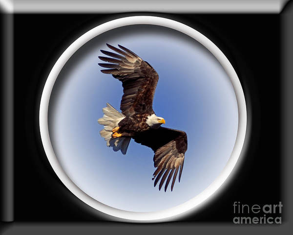 Color Photography Art Print featuring the photograph Majestic Flight by Sue Stefanowicz