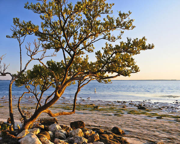 Florida Landscapes Art Print featuring the photograph Morning Light At Sunset Park by Betty Eich