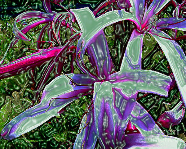 Flower Art Print featuring the photograph Plasticized Cape Lily Digital Art by Merton Allen