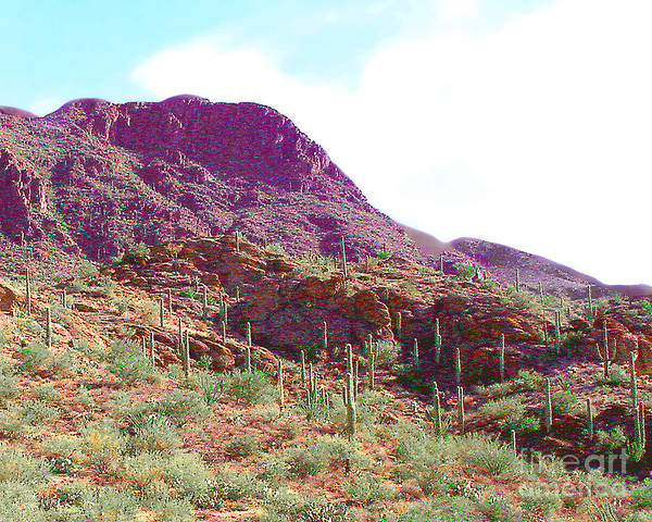 Arizona Art Print featuring the photograph Saguara National Forest In Arizona by Merton Allen