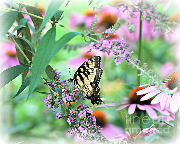 Simple Beauty Swallowtail Butterfly Print Art Print featuring the photograph Simple Beauty by Lila Fisher-Wenzel