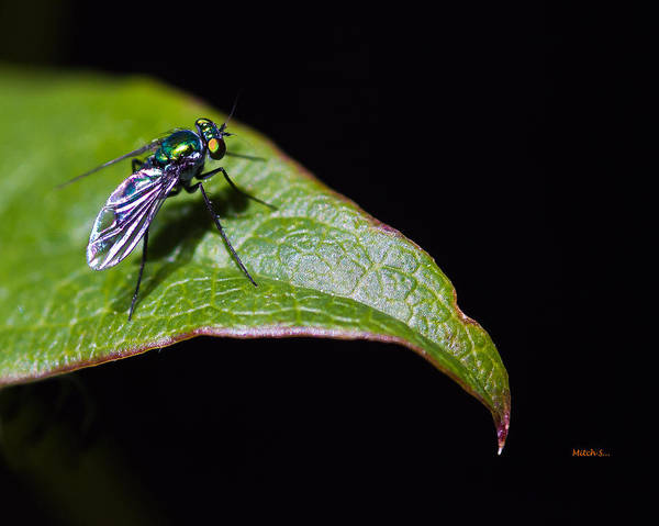 Small Green Fly 2 Art Print featuring the photograph Small Green Fly 2 by Mitch Shindelbower