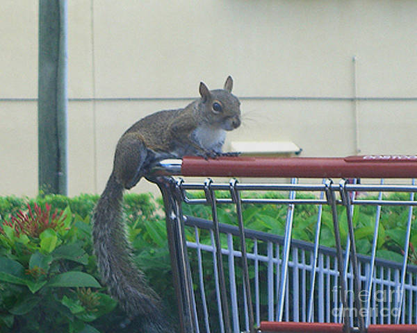 Squirrel Art Print featuring the photograph Squirrel Going Shopping by Merton Allen
