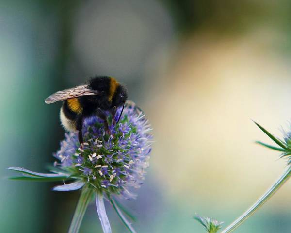 Bee Art Print featuring the photograph The Harvest by Valerie Shultz