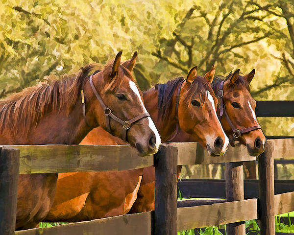 Horses Art Print featuring the photograph Three Friends by Betty Eich