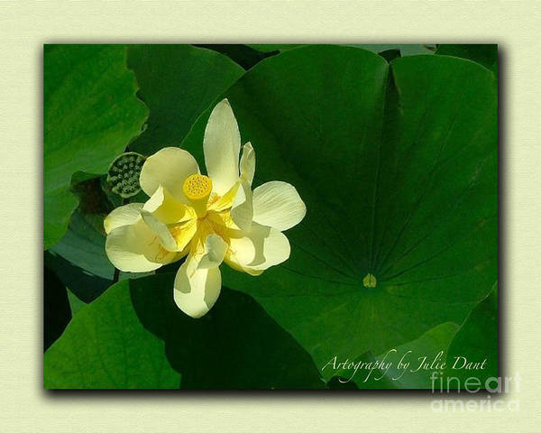 Flowers Art Print featuring the photograph Yellow Lotus Blossom In Mississippi by Julie Dant