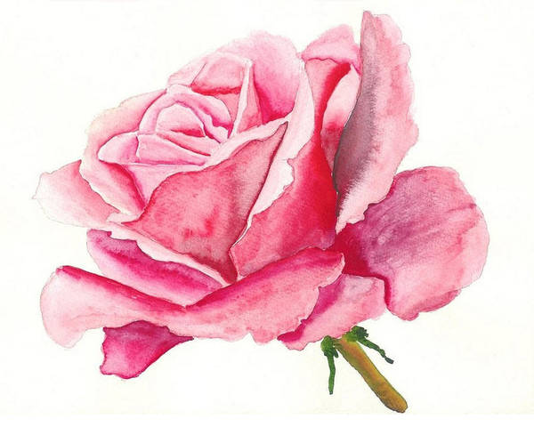 Pink Rose Art Print featuring the painting Pink Rose by Robert Thomaston