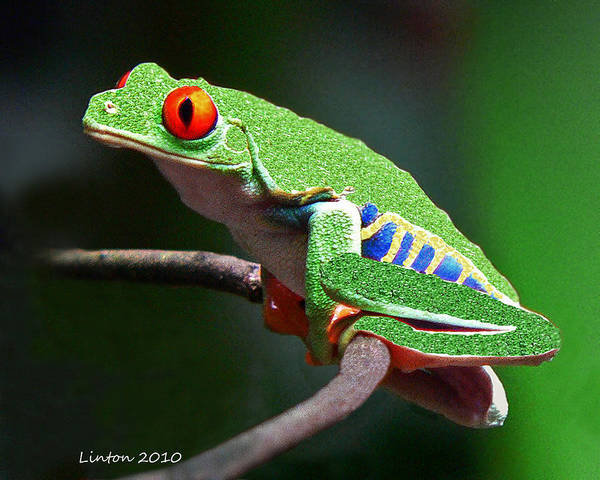 Leaf Frog Art Print featuring the photograph Red-eyed Leaf Frog by Larry Linton