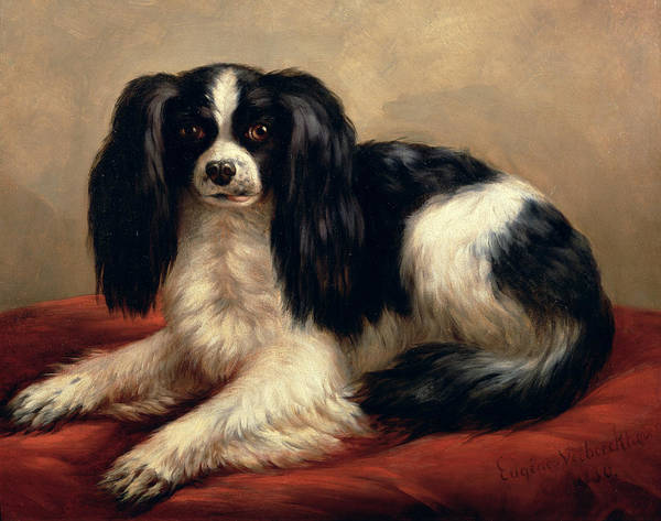A King Charles Spaniel Seated On A Red Cushion Art Print featuring the painting A King Charles Spaniel Seated On A Red Cushion by Eugene Joseph Verboeckhoven