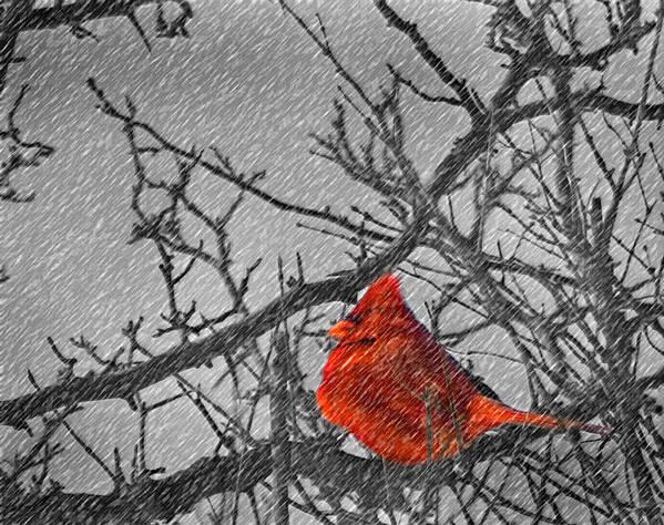 Ohio Art Print featuring the photograph A Winter Wonder by Kenneth Krolikowski