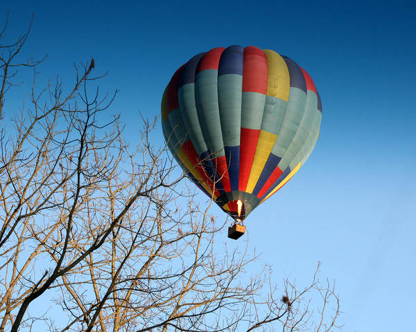 Hot Air Balloon Art Print featuring the photograph Above The Tree Tops by George Jones
