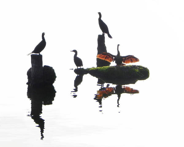 Anhingas Art Print featuring the photograph Anhingas Sunning by Francesa Miller
