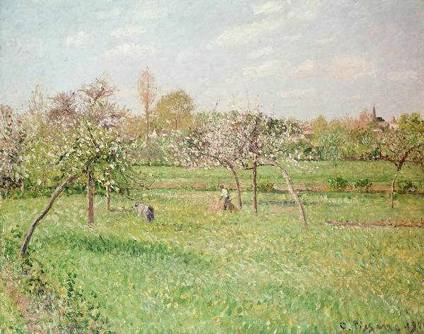 Apple Art Print featuring the painting Apple Trees At Gragny by Camille Pissarro