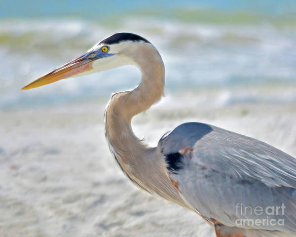 Blue Heron Art Print featuring the photograph Beautiful Blue On The Beach by Third Eye Perspectives Photographic Fine Art